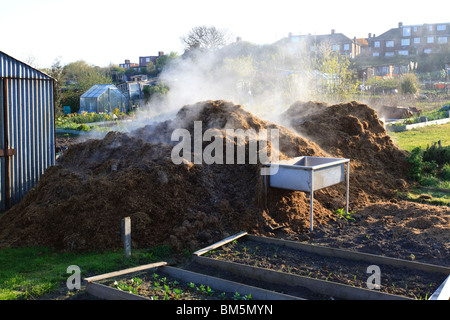 A steaming pile of horse manure on an allotment - Stock Photo