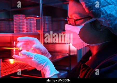 Private Clinic for in vitro fertilization. Artificial fertilization. Sperm is injected into an egg. Incubator for - Stock Photo