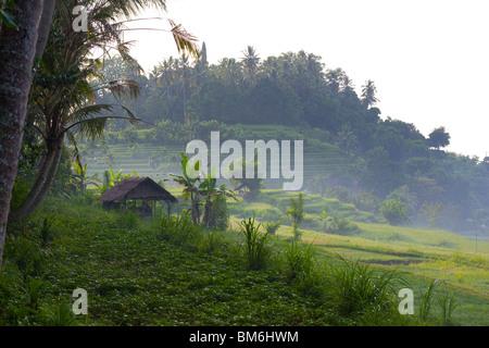 Rice field at Tirta gangga, Bali Indonesia - Stock Photo