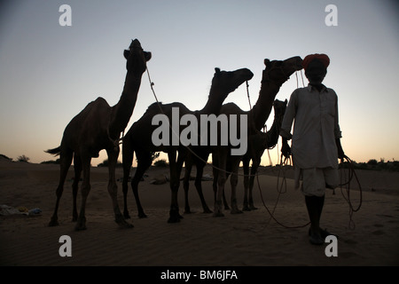 A guides leads four camels on a camel safari in the Great Thar Desert outside Jaisalmer, Rajasthan in India. - Stock Photo