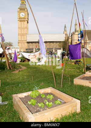 Peace camp set up by various activist groups in Parliament Square London May 2010 - garden of lettuces - Stock Photo