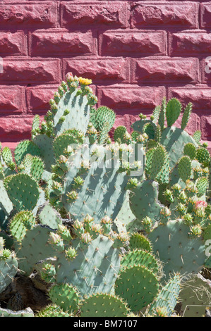 A desert cactus garden flourishes next to the Red Schoolhouse in Three Rivers, New Mexico. - Stock Photo