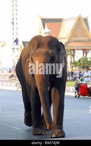 elephant walking down Sisowath Quay, Phnom Penh, Cambodia - Stock Photo
