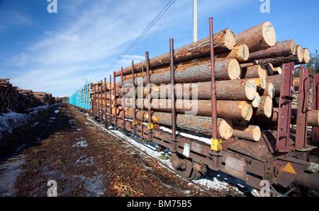 Cargo train loaded with pine ( pinus sylvestris ) logs , Finland - Stock Photo
