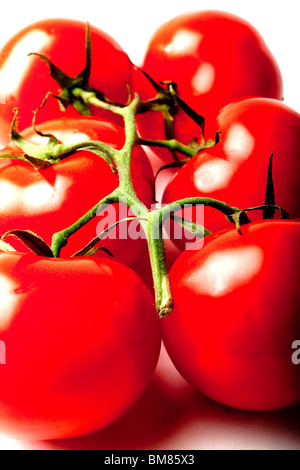 Tomatoes on the vine product shot. - Stock Photo