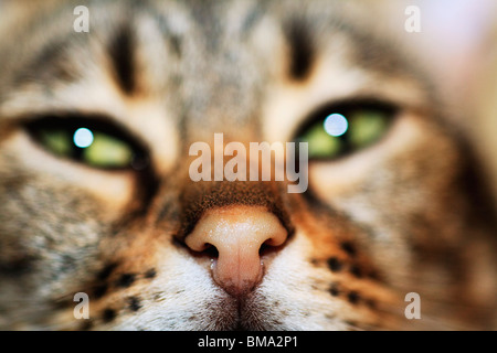 A Cat's Face - Stock Photo