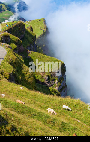 Alps landscape with goats on mountains. - Stock Photo