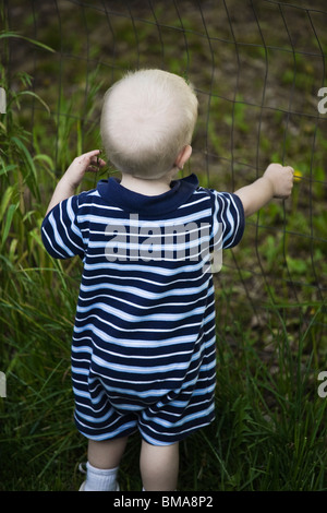 18 month old baby boy grabbing a wire fence. - Stock Photo