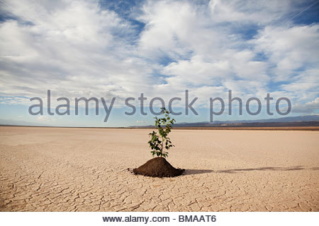 Plant growing in desert landscape - Stock Photo
