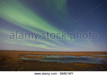 Curtains of colored northern lights (aurora borealis) dance in the night sky over the arctic tundra on the coastal - Stock Photo