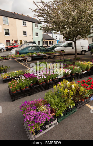 UK, England, Devon, Dartmouth, Smith Street, historic Pannier Market nursery stall selling annual flowers - Stock Photo
