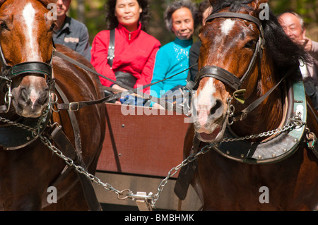 Chinese tourists in Germany enjoying a traditional horse carriage ride near Neuschwanstein Castle. - Stock Photo