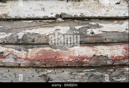 Decaying Wood - John Gollop - Stock Photo