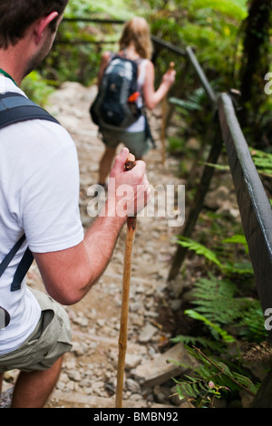 Hiking through tropical forest on the Mt Kinabalu summit trail. Kinabalu National Park, Sabah, Borneo, Malaysia. - Stock Photo