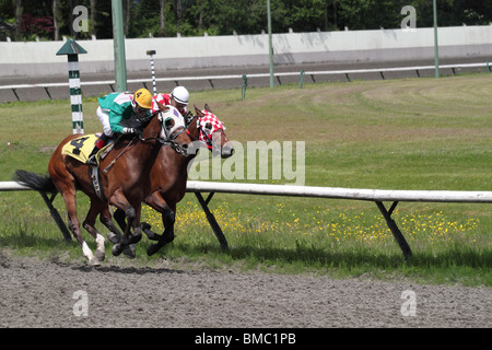 Two race horses and their jockeys turning the bend in a head to head battle to reach the finish line. - Stock Photo