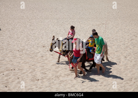 Donkeys on beach Gt Yarmouth Norfolk - Stock Photo