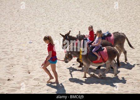 Donkeys on the beach - Stock Photo