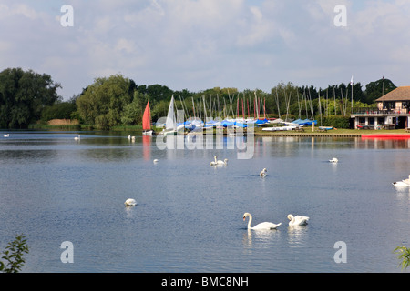 view across the lake at Priory Country Park, Bedford, with swans and sailing dinghies, Bedfordshire, UK - Stock Photo