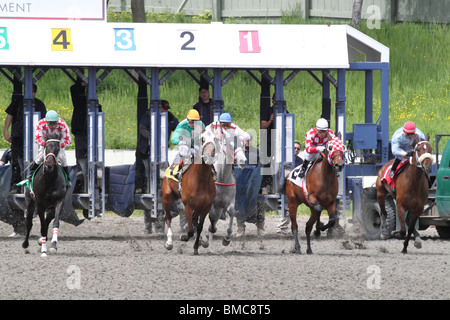 Race horses breaking from the gate on race day - Stock Photo