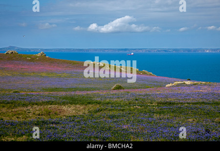 Wildflowers in Springtime on Skomer Island, Pembrokeshire, Wales - Stock Photo