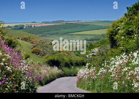 Country Lane bordered by spring flowers in Pembrokeshire, Wales - Stock Photo