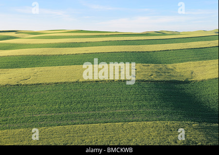 Fields, Palouse Region, Palouse, Whitman County, Washington State, USA - Stock Photo