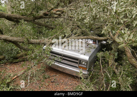giant live oak tree splits in half and falls on house and auto, Alachua Florida - Stock Photo