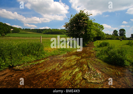 Hambleden Brook, a chalk stream flowing through Hambleden in the Chilterns towards Mill End, Buckinghamshire, United - Stock Photo