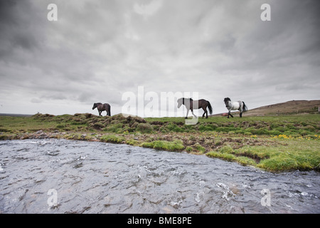Horse walking on field - Stock Photo