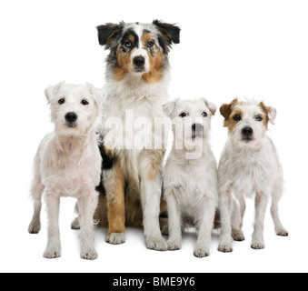 Portrait of four dogs in front of white background - Stock Photo