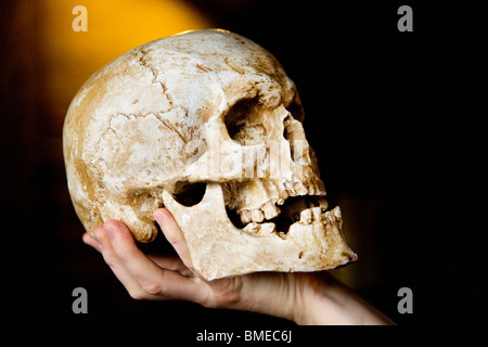 Person holding human skull - Stock Photo