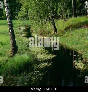 Watercourse flowing through foliage - Stock Photo