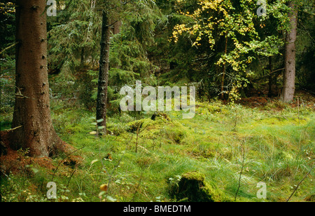 Trees and grass growing in forest - Stock Photo