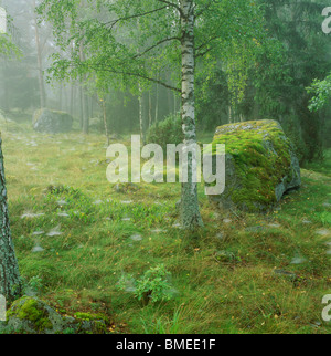 Moss covered rocks and trees in forest - Stock Photo