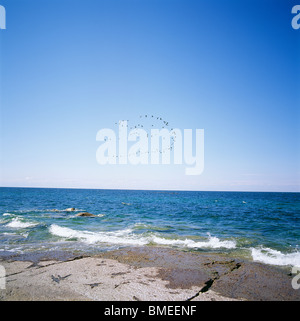 Flock of birds flying over sea - Stock Photo