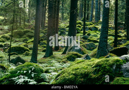 View of moss covered forest - Stock Photo