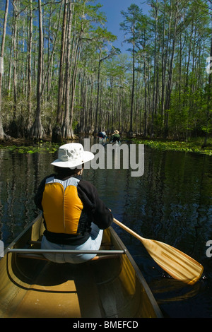 North America, USA, View of person rowing boat on swamp - Stock Photo
