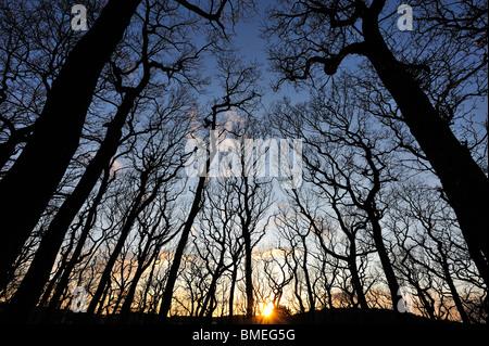 Scandinavia, Sweden, Vastergotland, M?lndal, View of forest at dusk - Stock Photo