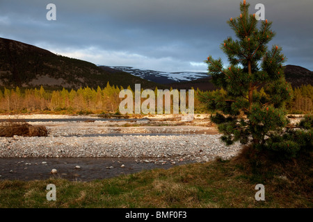 Snow capped Scottish Cairngorms form a backdrop to the lowland pine forest and the river Feshie on a late spring - Stock Photo
