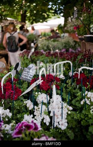Adults Visiting Paris, France, Garden Festival, Jardin des Tuileries, TUileries Gardens, Detail House Plants - Stock Photo