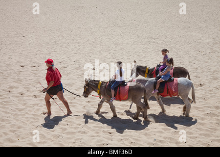 Gt Yarmouth beach donkey rides - Stock Photo