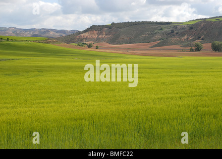 landscape with wheat fields, near Huete, Cuenca Province, Castile-La Mancha, Spain - Stock Photo