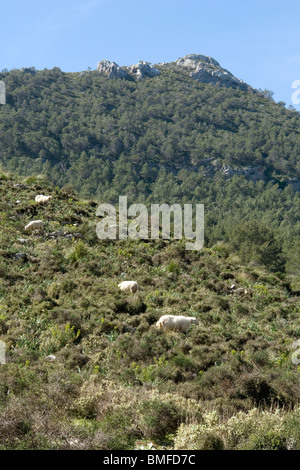 The Ofre summit in the Tramuntana mountain (Majorca - Spain). Le sommet de l'Ofre dans la montagne Tramuntana (Majorque). - Stock Photo