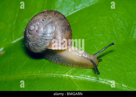 Small Snail Macro - Stock Photo