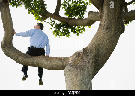 Businessman sitting in tree - Stock Photo