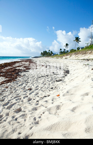 A beautiful, sunny beach with palm trees on Hope Town, Elbow Cay in the Abacos, Bahamas. - Stock Photo