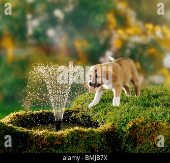 hybrid puppy drinking from water-fountain - Stock Photo