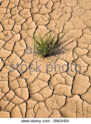 Plant growing in cracked, dry earth - Stock Photo