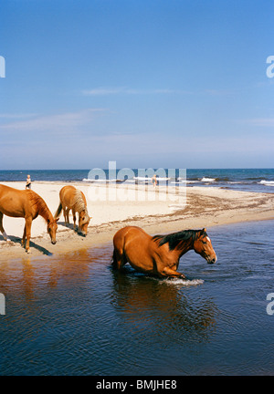 Horse bathing in the sea, Sweden. - Stock Photo
