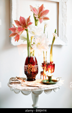 Amaryllis in a vase, Sweden. - Stock Photo